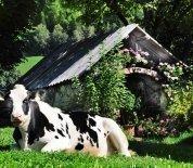 leimgruberhof-terenten-15
